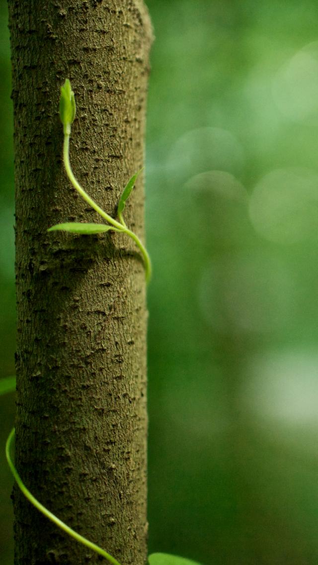 Tree Vines iPhone 5 Wallpaper